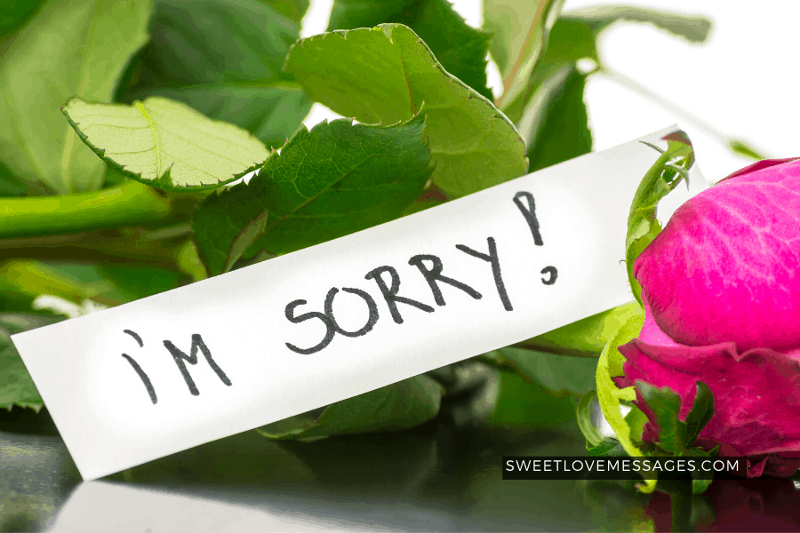 Apology Letters 2